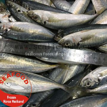 Frozen Horse Mackerel in 100G-150G