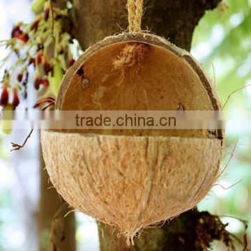Coconut shell bird feeders of coconut shell bird feeders for Whole coconut bird feeders