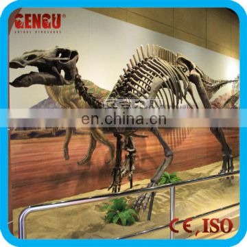 Museum High Quality Dinosaur Fossils Skeleton