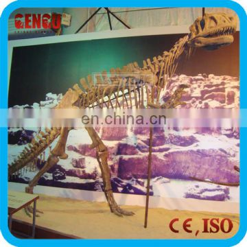 Prehistoric Animal Dinosaur Skeletons for Sale