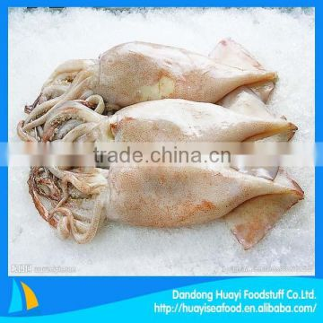 High quality frozen squid raw material