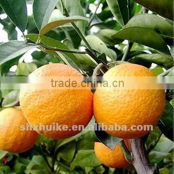 Grapefruit P.e. curse diabetes product naringin p.e with function of anti-virqal,anti-mutation