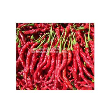 100% Light yellow to red brown oily liquid chili pepper Capsaicin Capsicum Extract capsaicine