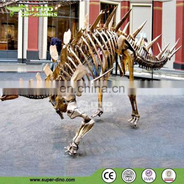 Dinosaur Exhibition Real Size Simulation Dinosaur Fossil