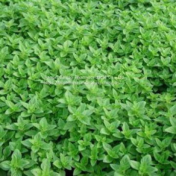 CAS NO. 8007-11-2 manufacturer 70% Carvacrol origanum oil cretic Spanish oregano from Thymus capitatus