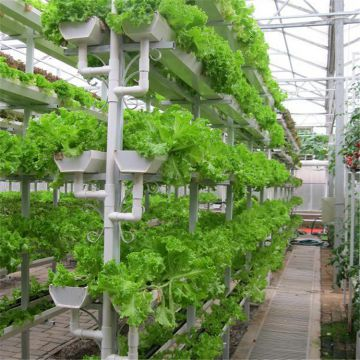 Glass Greenhouse with Hydroponic Growing System for Agriculture Planting