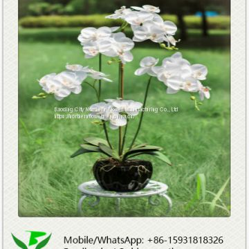 Decorative Real Touch White Artificial Orchid