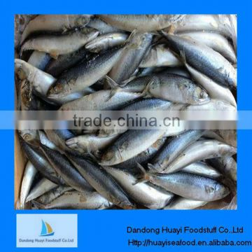 frozen mackerel fish hgt mackerel