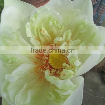 Fresh White Lotus Flower Bud Supplier In India Of Fresh Flowers From