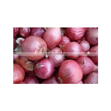Export Quality Indian Fresh Red White Pink Onion