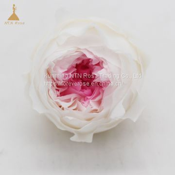Preserved Rose  Flowers Dried Flowers Birthday Valentine Party Wedding